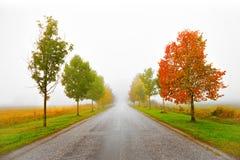 Avenida en otoño Foto de archivo libre de regalías