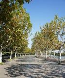 Avenida en parque Fotografía de archivo libre de regalías