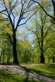 Avenida en parque del verano Fotografía de archivo