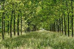 Avenida herbosa cerca de Zwolle Fotografía de archivo libre de regalías