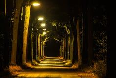 Avenida iluminada fotos de stock royalty free
