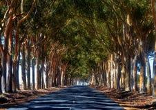 Avenida larga Imagen de archivo libre de regalías