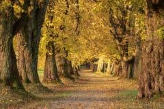 Avenida outonal bonita no sul de Alemanha perto de Mindelheim fotografia de stock