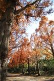Avenida Tree-lined com folhas de outono fotografia de stock royalty free