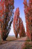 Avenida Tree-lined vermelha em Italy fotografia de stock royalty free