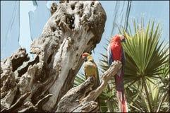 Avenida tricolora de Loro tropical fotografía de archivo libre de regalías