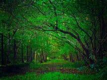A avenida verde Fotografia de Stock Royalty Free