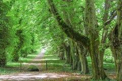 Avenida verde con los árboles viejos Imágenes de archivo libres de regalías