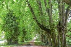 Avenida verde con los árboles viejos Fotografía de archivo