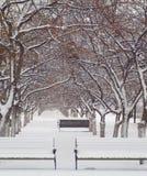 Avenida y bancos de Snezhnaya Foto de archivo