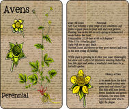 Avens Vintage Seed Packet Royalty Free Stock Image