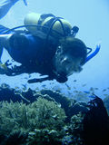 Aventura del buceo con escafandra Fotografía de archivo libre de regalías