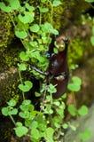 Aventura del insecto del insecto del escarabajo en el mini bosque Foto de archivo libre de regalías