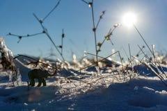 Aventura del invierno del elefante de la plastilina Hierba congelada Naturaleza del invierno Fotos de archivo