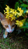 Aventura do gato Imagens de Stock Royalty Free