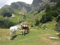 Aventura en la montaña Fotografía de archivo libre de regalías