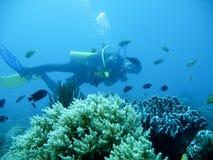 Aventura tropical del buceo con escafandra Fotografía de archivo