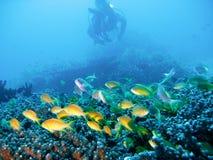 Aventura tropical del buceo con escafandra Foto de archivo