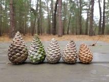Aventuras do ar livre de Pinecones que acampam caminhando a natureza fotos de stock royalty free