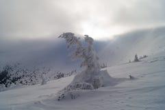 Aventuras do inverno Fantasma Carpathians da neve ucrânia fotografia de stock