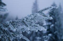 Aventuras do inverno Floresta nevado Carpathians ucrânia foto de stock