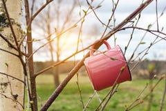 Aventuras en el salvaje La taza del viaje cuelga en rama de árbol en día soleado de la primavera, foto de archivo libre de regalías
