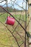 Aventuras no selvagem A caneca do curso pendura no ramo de árvore no dia ensolarado da mola, imagem de stock royalty free