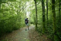 Aventure augmentant sur la forêt de hêtre de Pyrénées Images libres de droits