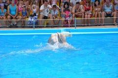 Aventure dans le monde de l'espèce marine - montrez avec des dauphins odessa l'ukraine photo stock