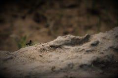 Aventure du ` s de fourmi Photos stock