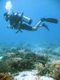 Aventure tropicale de plongée à l'air Images libres de droits