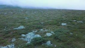 Aventurero en el acantilado, admirando el canto verde que estira en la niebla delante de él, viajando en las montañas metrajes