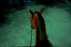 Aventures de cheval Image libre de droits