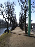 Avenue. Spring in Petersburg. Bare trees Stock Image