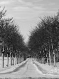 Avenue. Of trees leading to a house stock photo