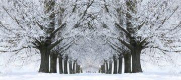 avenue zdjęcia royalty free