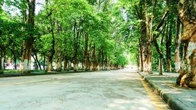 avenue Photo stock