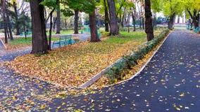 Avenue abandonnée 2 Images libres de droits