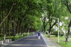 avenue along The Xuanwu lake stock image
