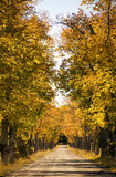 Avenue in the autumn Royalty Free Stock Image
