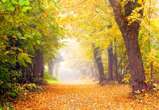 Avenue in autumn Stock Image