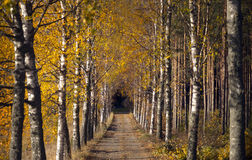 Avenue in autumn Stock Photography