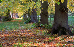 Avenue of Autumn Lime Trees Royalty Free Stock Photos