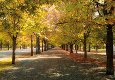 Avenue in autumn Stock Images