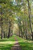 avenue  in autumn park Stock Images