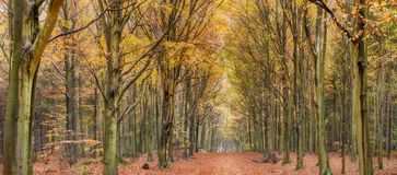Avenue of autumn trees royalty free stock photo