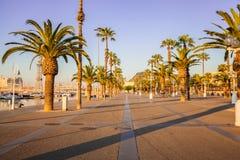 Avenue avec des palmiers à Barcelone l'espagne Photos stock