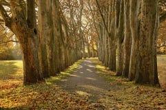 Avenue avec la ligne des arbres Image libre de droits