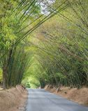 Avenue avec la route et les arbres de bambou Image libre de droits