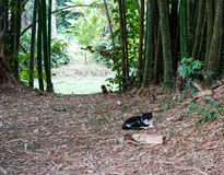 Avenue with bamboo. In the middle of the image on the garden path between the bamboo is a cat and resting Royalty Free Stock Photo